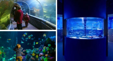 Sealife, Berlin, Aquarium, Expedienten, PEP
