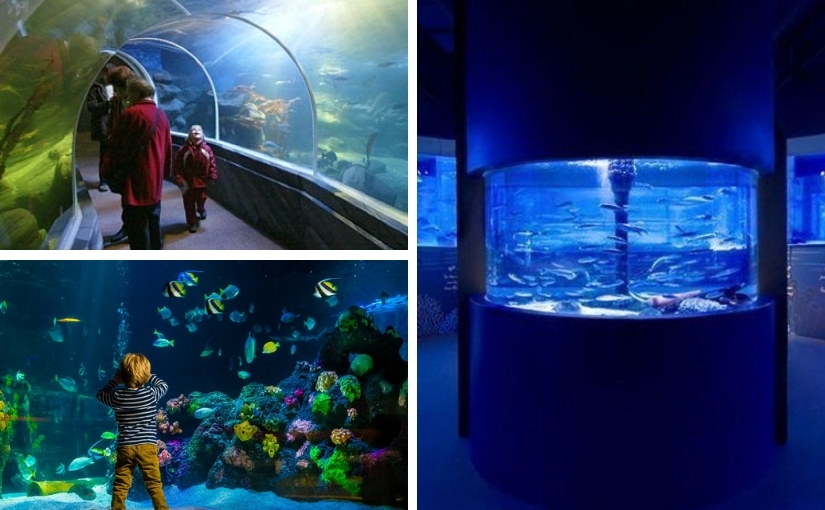 Sealife, Berlin, Aquarium, Expedienten, PEP