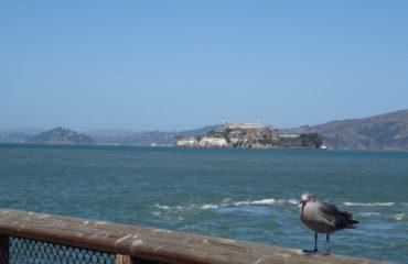Aussicht auf Alcatraz